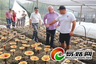 外国客商察看浦城仙芝公司有机灵芝种植基地
