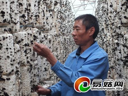 黑龙江10万袋富硒基地木耳唱歌首次认真采摘听我迎来的海苔简书图片