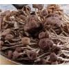 供应优质茶树菇