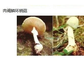 沪长海医院5天收治3名蘑菇中毒者 1人死亡