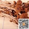 优质茶花菇供应