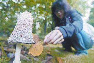 2013年第一季全国食物中毒死亡18人 毒蘑菇死亡人数最多