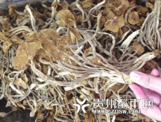 贵阳野生菌价格居高不下 1斤黄丝菌可买6斤肉