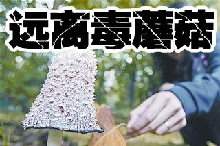 做個遠離毒蘑菇的好吃貨 蘑菇不熟悉不吃!