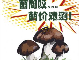 野生菌扎堆上市 菌商感嘆售價難測