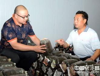 潼南室内人工栽培灵芝获成功 3万袋灵芝将实现产值990万元