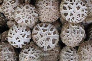 庆元香菇上市首日成交量达2679.522吨