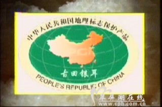 """""""中国驰名商标""""古田银耳在渤商所上市"""