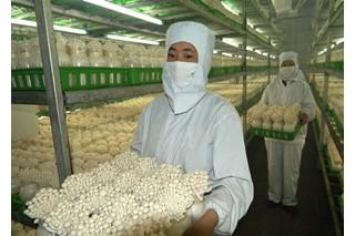 食用菌企业使用二氧化氯消毒剂漂白菌菇遭查封