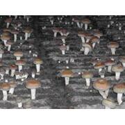 丽水市大山菇业研究开发有限公司