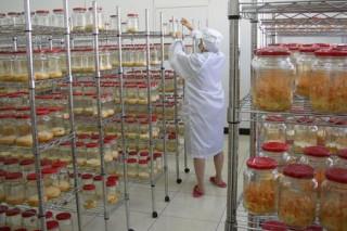 国内北虫草工厂化生产基地在山东初建成