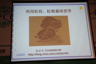 专题报告:韩省华《利用松枝松根栽培茯苓》2 (3)