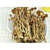 茶树菇之乡厂家直销,新鲜茶树菇,茶树菇干货供应