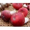 供应优质红香菇丨红香菇生产基地丨食用菌红香菇批发
