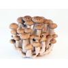 保鲜冷库|果蔬冷库|蘑菇冷藏库