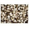 大量供应干草菇  腌制草菇 鲜草菇