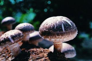 开启菌菇产业发展新纪元 新香菇市场正式投入试运营