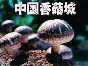 """中國香菇城"""" 航母""""揚帆起航  引爆菇業經濟""""燃火點"""""""