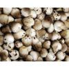 求购草菇,草菇花,黑平菇,杏鲍菇盐水的各20吨