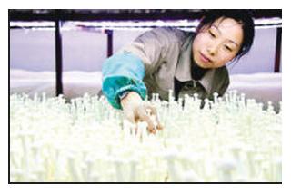 福建顺昌:海鲜菇产业发展壮大 龙头引领天地宽