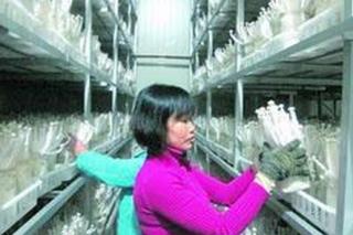 沙县新建三明市最大的海鲜菇生产基地