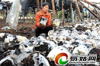 3万斤平菇化为灰烬 一把火碎了菇农心