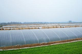 传统农业现代化 众兴菌业食用菌生产工厂化