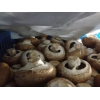 工厂化双孢菇、褐菇鲜品供应