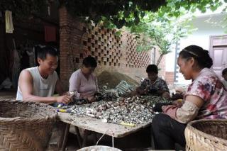 云南开远:姬松茸种植成农户增收新亮点