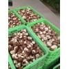 供应新鲜香菇,价格面议