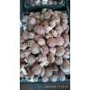 供应干香菇500斤,鲜香菇也有