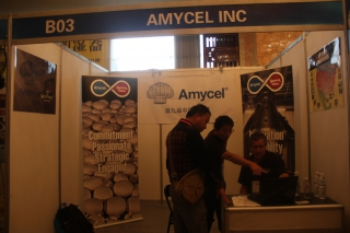 B03 AMYCEL INC ()