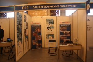 B11  DALSEM MUSHROOM PROJECTS BV ()