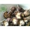 安徽金寨供应山林香菇