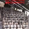 鲁南平菇 秀珍菇 菌种及出菇菌棒厂家 18266095871