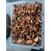 产地直销安徽野生松菌芜湖松树菇新鲜野生松乳菇茅草菇