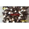 山东金乡黑皮鸡枞菌菌棒