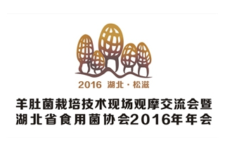2016羊肚菌栽培技术现场观摩交流会暨湖北省食用菌协会2016年年会官网
