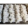 出售竹荪 新鲜竹荪 鲜竹笙、鲜竹菌、鲜网纱菇