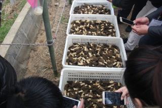 新鲜羊肚菌 ()