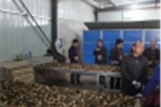 千亩羊肚菌栽培基地 (4)