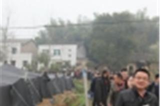 千亩羊肚菌栽培基地 (3)