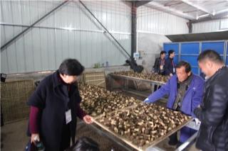 千亩羊肚菌栽培基地 ()
