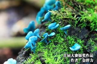 2016第三屆中國食用菌攝影作品大賽官網