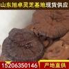 批发供应中药材韩芝,特级优质韩芝价格山东特产自产自销优质灵芝