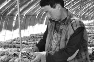 平菇毛木耳轮作试种成功 农民增收有保障