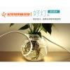 食用菌防水照明LED灯带