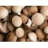 裕隆祥农业是优质的香菇批发商——实惠的香菇