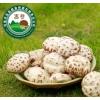 昌盛宝菇红黑大战批发干红黑大战精品干菇500g包装干花菇现货批发零售