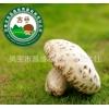 精品天白特级干花菇昌盛宝菇一号香菇批发零售